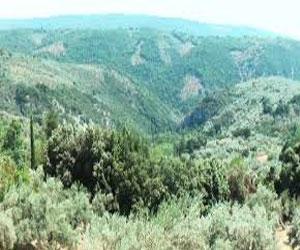 Гора в Фессалии – Пелион